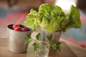 Vegetable Pot Garden by Banana Kiwi Fruit Kin Community Youtube