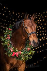 thanksgiving horse pictures 97 best christmas horses images on pinterest christmas animals