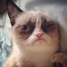 Grumpy Cat No Memes - grumpy cat grumpy cat what are they feeding you grumpycat