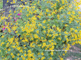austin texas native plants texas native plant week my gardener says u2026