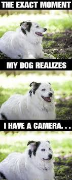 Annoyed Dog Meme - i can has cheezburger annoying funny animals online cheezburger