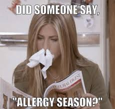 did someone say allergy season album on imgur