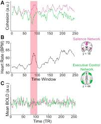 dynamic shifts in large scale brain network balance as a function