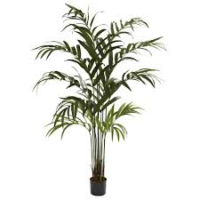 6 foot palace style ficus tree potted 5216