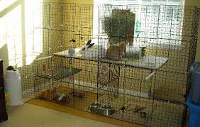 How To Build A Rabbit Hutch And Run Aucklandcavycare C U0026c Cages