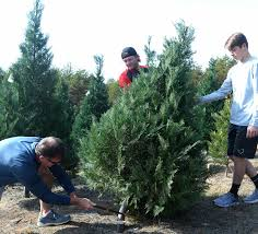 christmas trees in good shape despite drought news goupstate