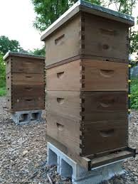 what are the pros and cons of a langstroth hive backyard beekeeping