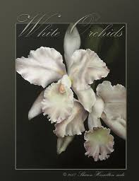white orchids how to paint white orchids by hamilton