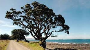 welcome to coastal tree services coastal tree services
