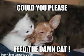 Funny Chihuahua Memes - 12 epic and hilarious dog memes to make you smile barking laughs