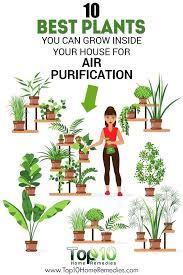 best house plants best house plants best indoor plants common house plants safe for