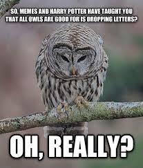 Owl Memes - livememe com oh really owl