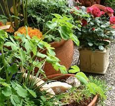 Indoor Container Gardening - indoor gardening ideas for winter