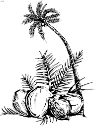 coconut coloring page coloring home