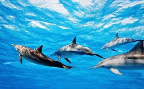 freedom for dolphins u2013 scubafilmfactory