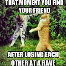 Cat Fight Meme - rave cat stolen from rave memes fb pg crazy cat lady