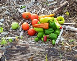Homemade Plant Food by Creating Salsa Gardens U2013 Growing Your Own Garden Fresh Salsa
