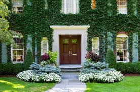 Indoor Vine Plant Vine Covered Walls Let You Enjoy The Outdoors For The Best Part Of