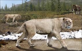 cave lion skull russia u0027s coldest region
