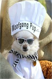 Halloween Costumes Dogs Cutest Puppy Costumes 2011 30 Dress Dogs Images Animals Funny Animals