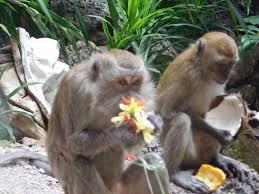 monkeys monkeys monkeys u0026 the batu caves best countries to