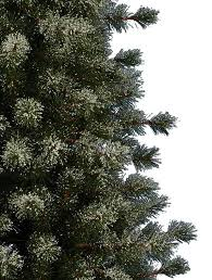 frosted sugar pine artificial trees balsam hill