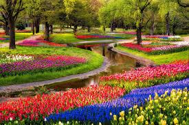 park pond tree flower muscari blue tulips colored flowers