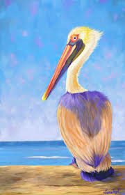 98 best pelican images on pinterest animals nature and