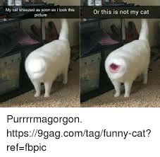 Soon Cat Meme - 25 best memes about this is not my cat this is not my cat memes