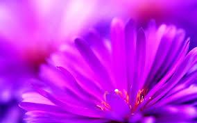 Cute Flower Wallpapers - cute purple flower 6910785