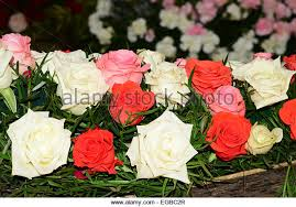 Different Color Roses Kerala Rose Flowers Stock Photos U0026 Kerala Rose Flowers Stock