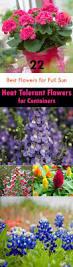 22 best flowers for full sun heat tolerant flowers for