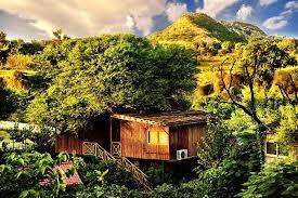 treehouse hotel pennsylvania book the tree house resort in achrol hotels com