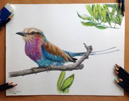bird color drawings drawing of sketch