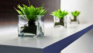 plant on desk 10 plants that won t die on your desk at work office plants