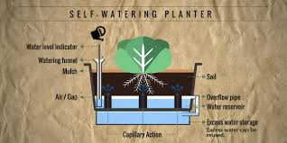 Self Watering Planters Self Watering Planters For Easy Vegetable Gardening Co Create Nature