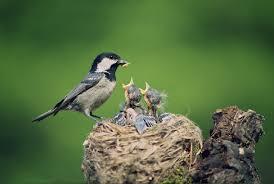 bird watching lessons tes teach