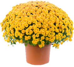 melody acres u003e mums
