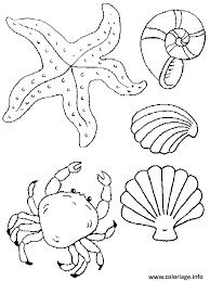 coloriage coquille de plage avec crabe ete dessin