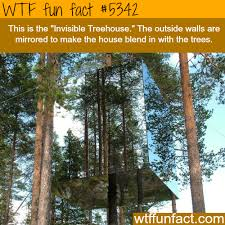 invisible tree house facts