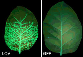 What Is Growth Movement Of A Plant Toward Light Called Blue Light Sensing In Plants