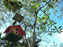 Birds In Your Backyard Ordinary Birds In Your Backyard Home Design