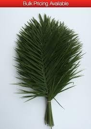 palms for palm sunday purchase palm distributors