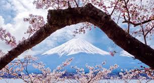 japanese cherry blossom culturemagazin com