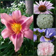 top low maintenance perennials with beautiful flowers dengarden