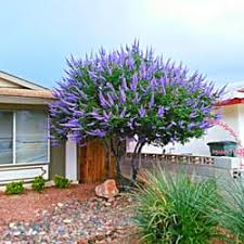 Landscaping Las Vegas by Weaver Landscapes 17 Photos Landscaping Las Vegas Nv Yelp