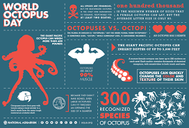 happy international octopus day scientific american blog network