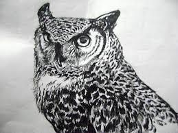 drawings of owls