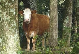 chambre d agriculture jura le bois redevient un enjeu pour les agriculteurs français