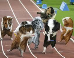 guinea pig games photos guinea pig games ny daily news